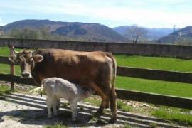 El Conventu casa rural en Infiesto (Asturias)
