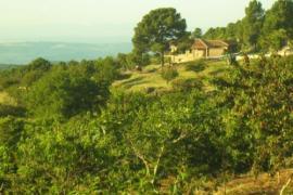 La Hacienda de Gredos casa rural en Guisando (Ávila)