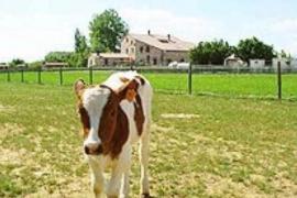 Albergues Turísticos Granja Escuela Arlanzón casa rural en Arlanzon (Burgos)