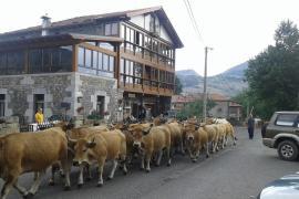 Posada El Mirador casa rural en Lavin De Soba (Cantabria)
