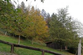 Cabañas en los Árboles de Leintz casa rural en Leintz - Gatzaga (Guipuzcoa)