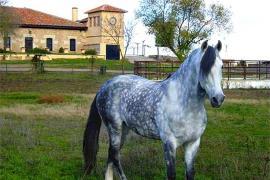 CTR La Torrecilla casa rural en San Pedro Del Valle (Salamanca)