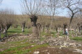 La Solana de Brieva casa rural en Brieva (Segovia)