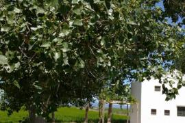 Casa Cusa casa rural en Sant Jaume D' Enveja (Tarragona)