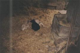 El Encinar casa rural en Pereruela (Zamora)