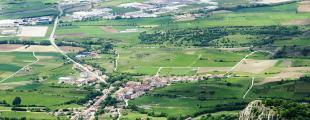 Araia