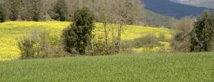 Vallferosa