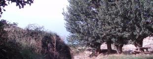 Cuevas De Almuden