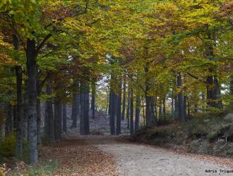 Parque De Montseny