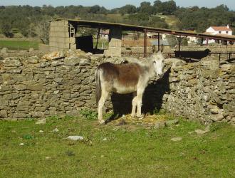 Bodonal De La Sierra