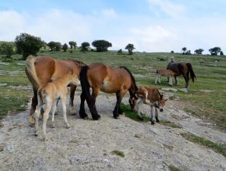 Parque Natural De Montes Obarenes-san Zadornil