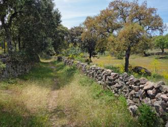 Campo Arañuelo