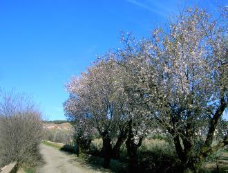 Alcudia De Guadix
