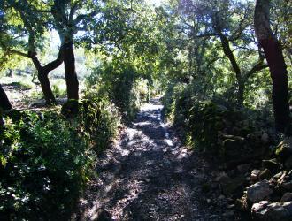 Higuera De La Sierra