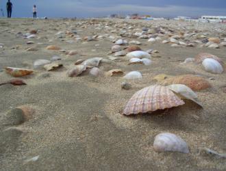 Comarca De Huelva