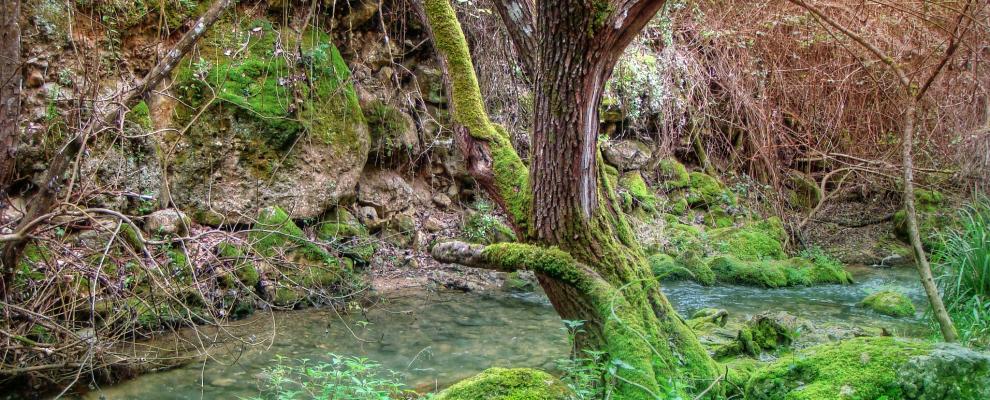 Qu ver y d nde dormir en el bosque c diz clubrural - Casas rurales en el bosque cadiz baratas ...