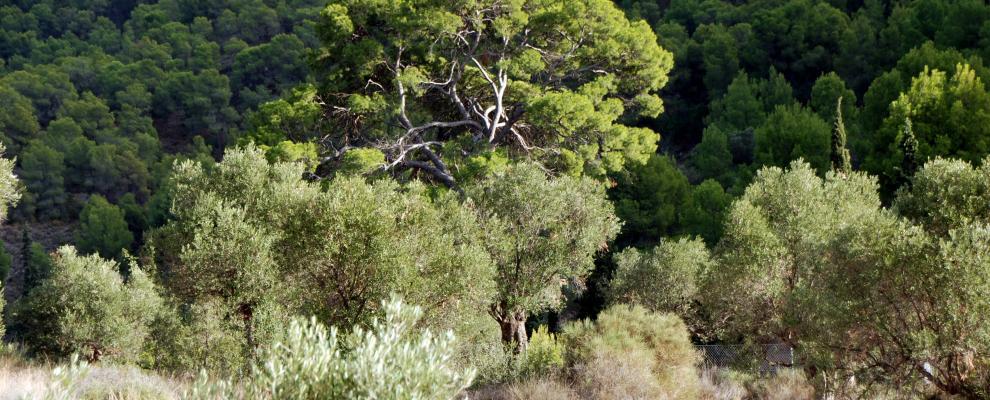 Alberca De Las Torres