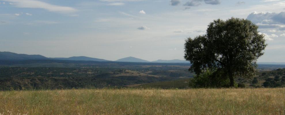 Serradilla Del Llano